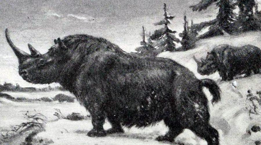 Ученые могут воссоздать этих исчезнувших животных