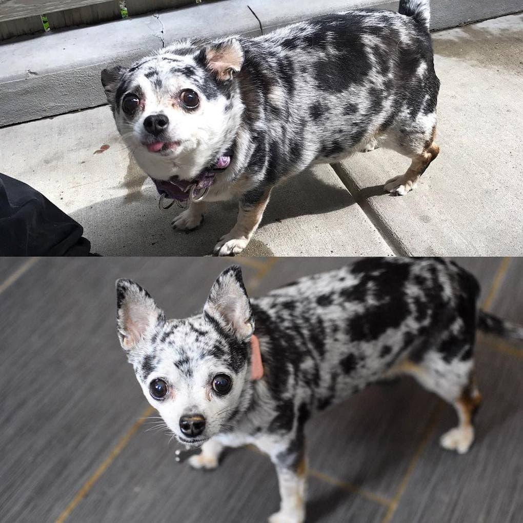 Фотографии собак, которые взяли себя в лапы и смогли похудеть