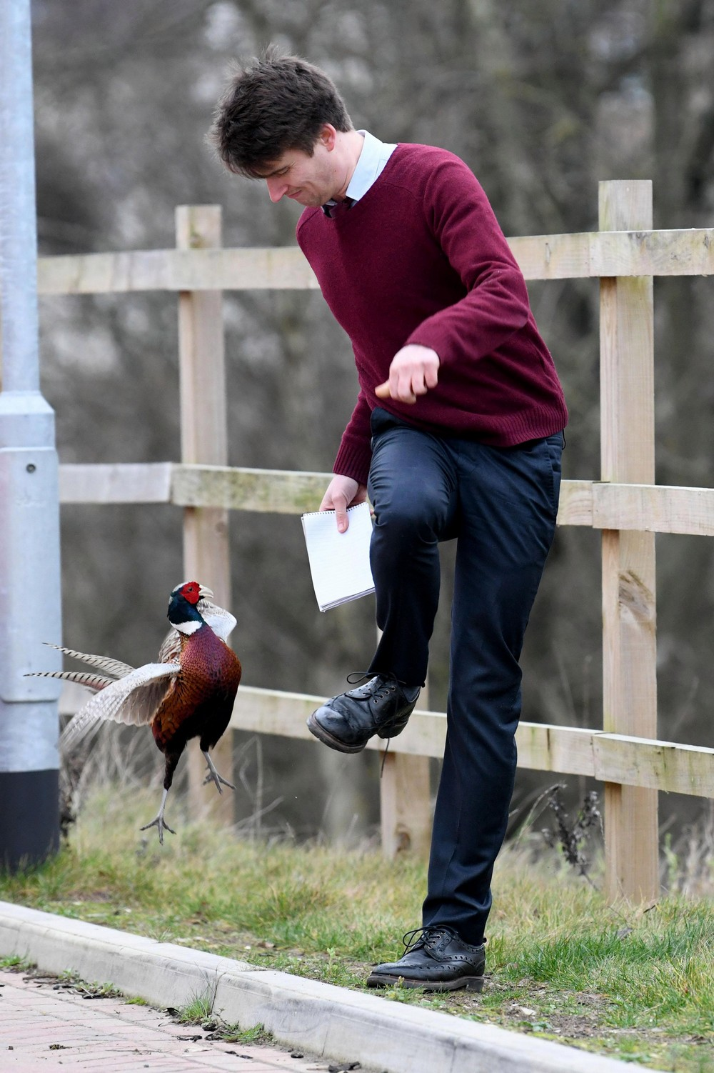 Агрессивный фазан нападает на жителей британской деревни