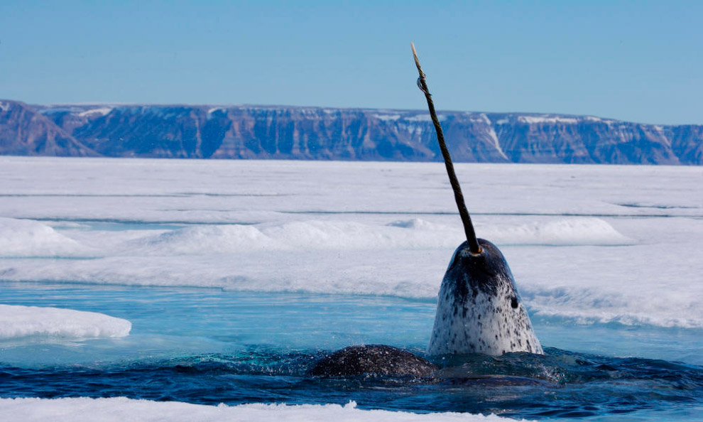 Наиболее редкие морские млекопитающие