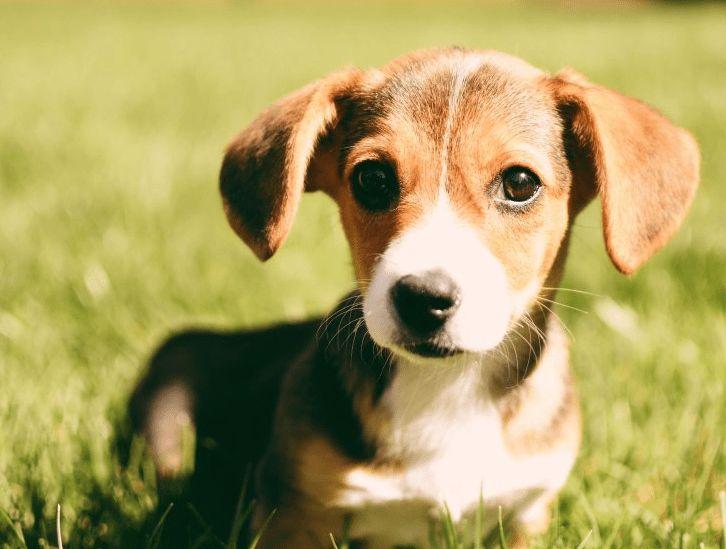 Результаты помеси разных пород собак