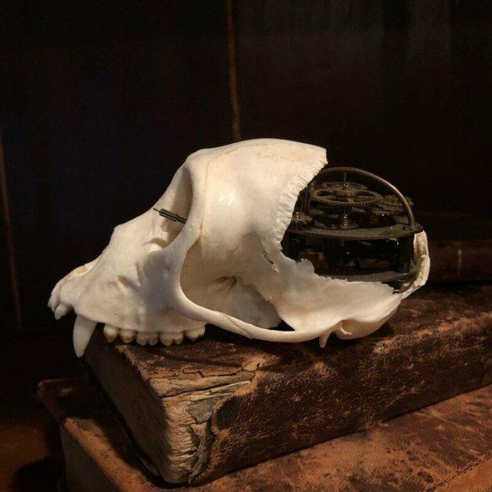 Работы очень необычных художников: мертвечина в искусстве
