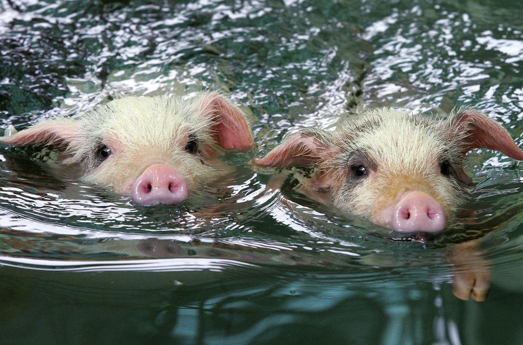 Как купаются братья наши меньшие