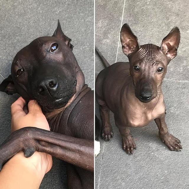 Это собака или бронзовая статуя?
