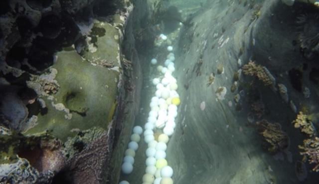Фридайверы достали пару тонн мячиков для гольфа из океана