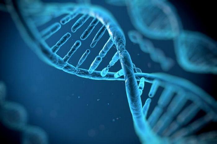 Научные открытия, сделанные благодаря изучению древней ДНК