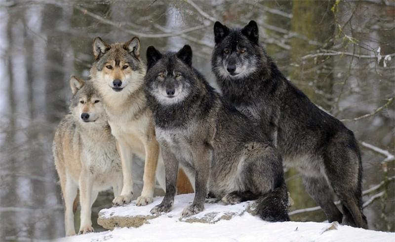 10 животных с высоким уровнем интеллекта