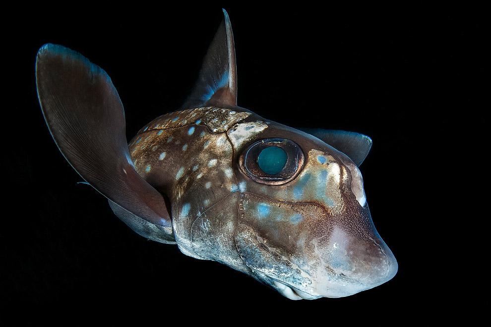 Подводные снимки с конкурса Ocean Art 2018