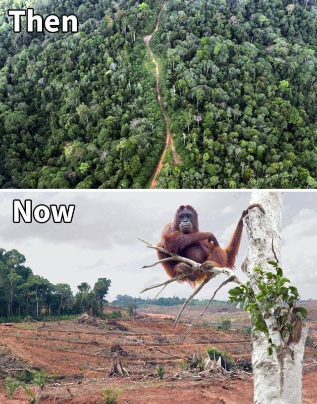 Климатические изменения от экологических организаций в стиле 10YearChallenge