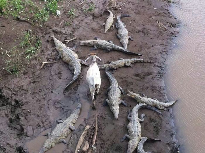 Наглые животные, которым все равно