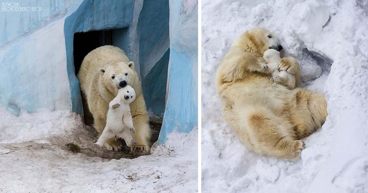 Милые малыши из мира животных