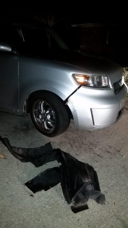 Собаки напали на автомобиль