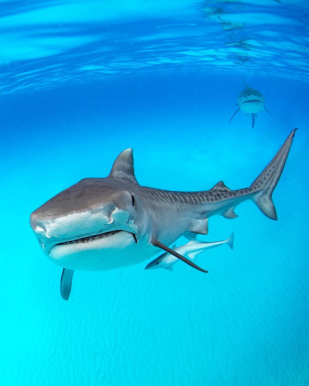 Удивительные подводные снимки от Алекса Доусона