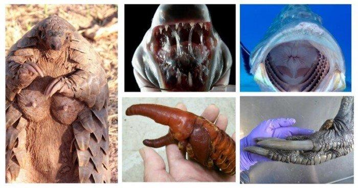 Взгляд на некоторых животных с невероятных ракурсов
