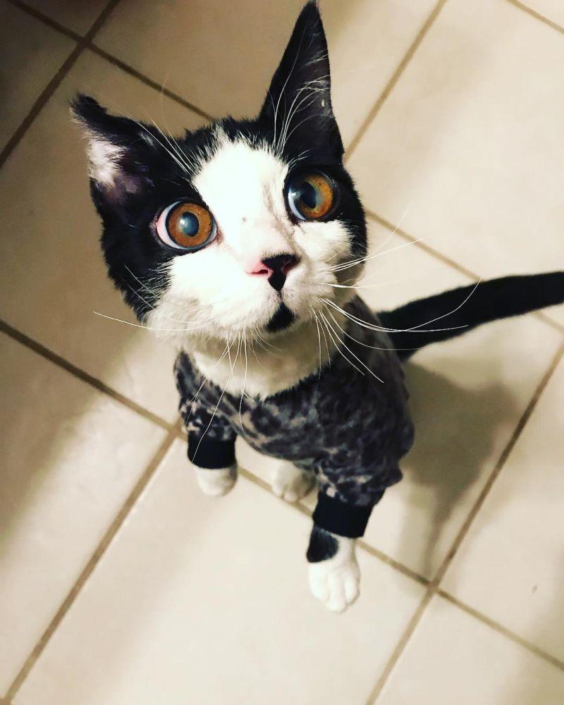 Из-за редкого синдрома у кошки огромные глаза и куча нарядов