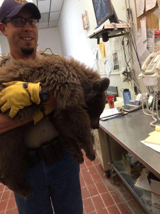 Медвежонок уснул в кухне ресторана