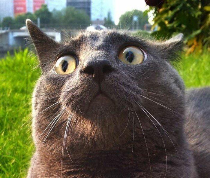 20 доказательств того, что коты просто созданы для драмы