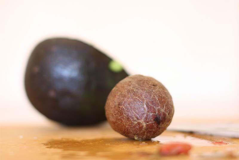 Производство столовых приборов из косточек авокадо