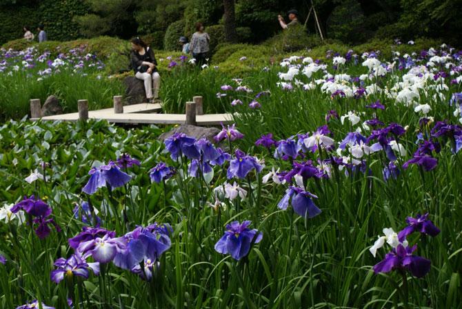 Японские сады храма Хэйан-джингу