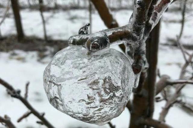 Призрачные плоды на фруктовом дереве