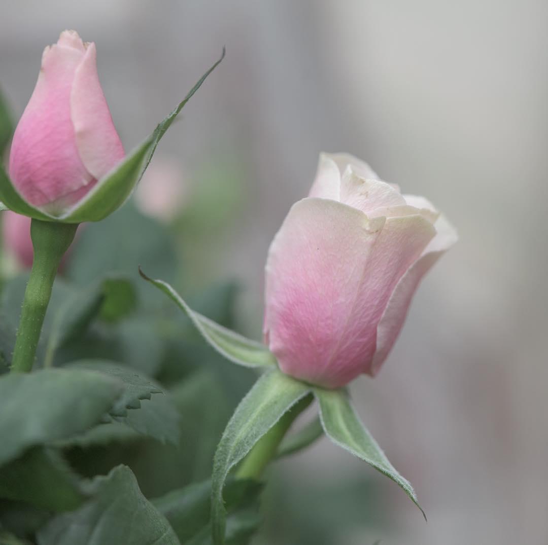 Красивые снимки цветов и растений от Элисон Стэйт