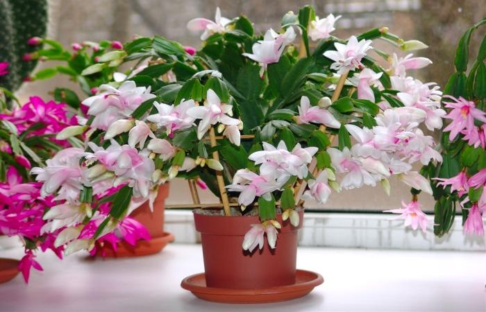 Ингредиент, который пойдет на пользу вашим комнатным растениям