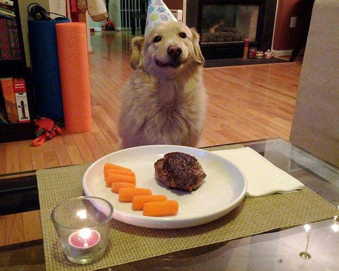 Домашние питомцы отмечают свои дни рождения