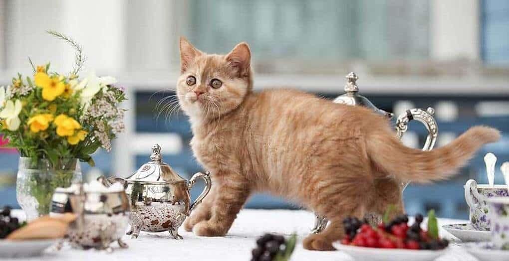 Привычки кошек, которые воспитывают сами хозяева