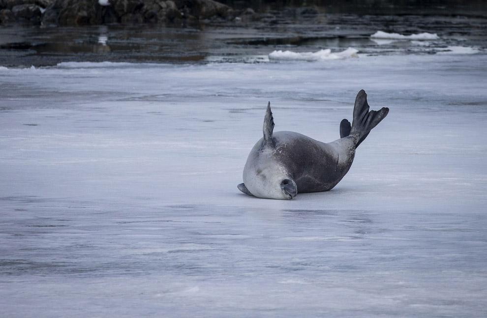Путешествие в Антарктиду на снимках