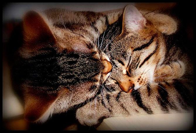 Кошачья любовь и обнимашки на фото