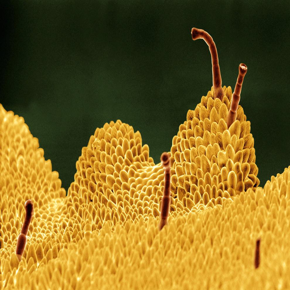 Макрофотографии цветов и растений