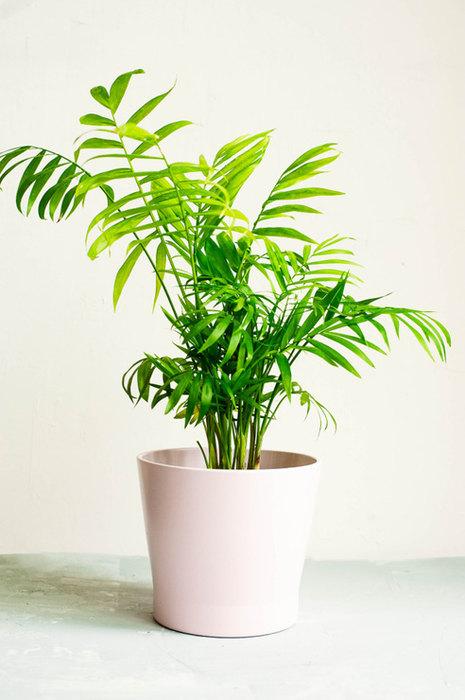 Комнатные растения, которые не требуют много света