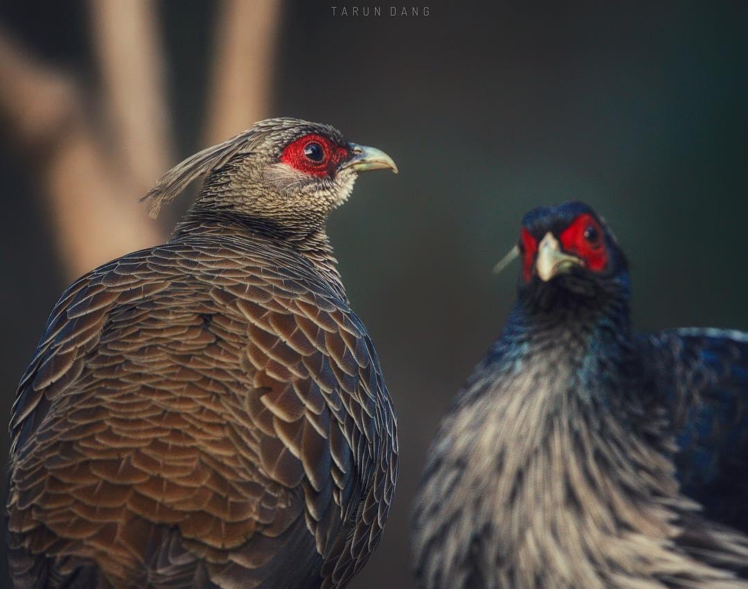 Красивые фотографии птиц от Таруна Данга