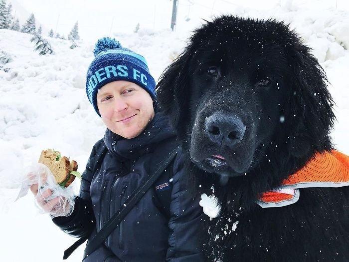 Очаровательные ньюфаундленды похожи на домашних медведей