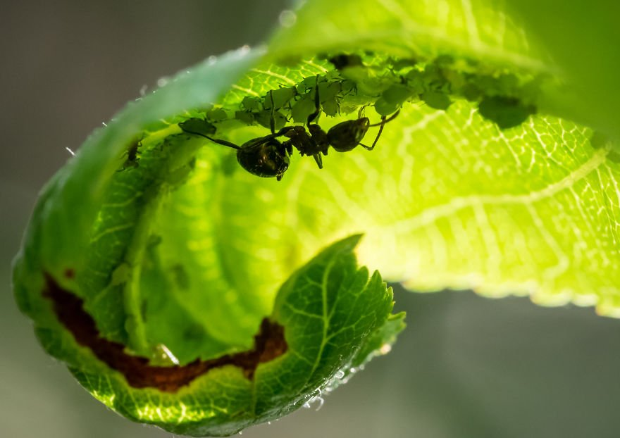 Фотограф превратила свой сад в фотостудию на свежем воздухе