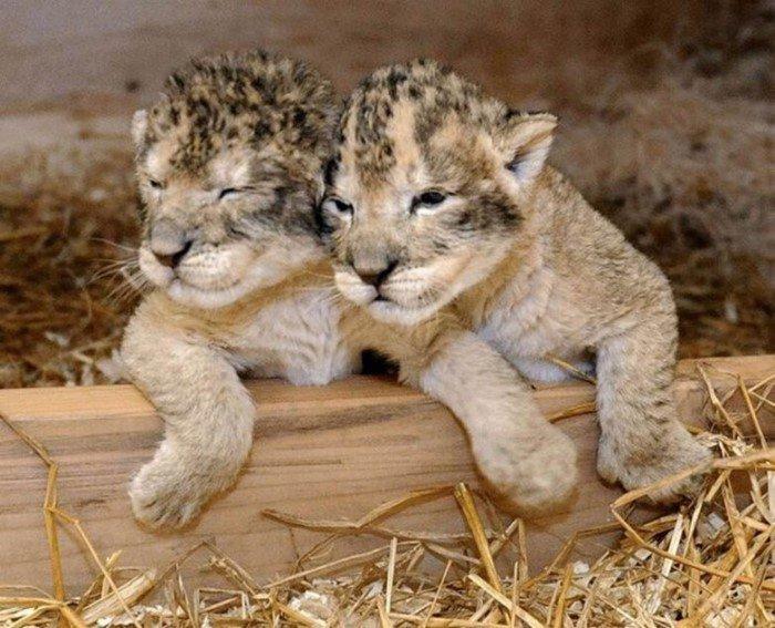 Милые детёныши разных животных