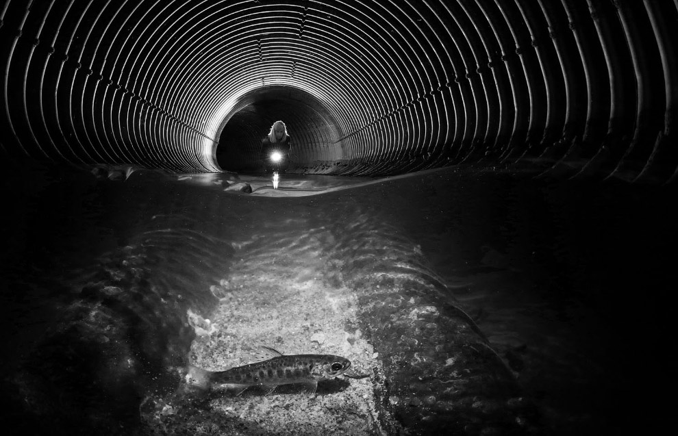 Победители фотоконкурса Underwater Photographer of the Year 2019