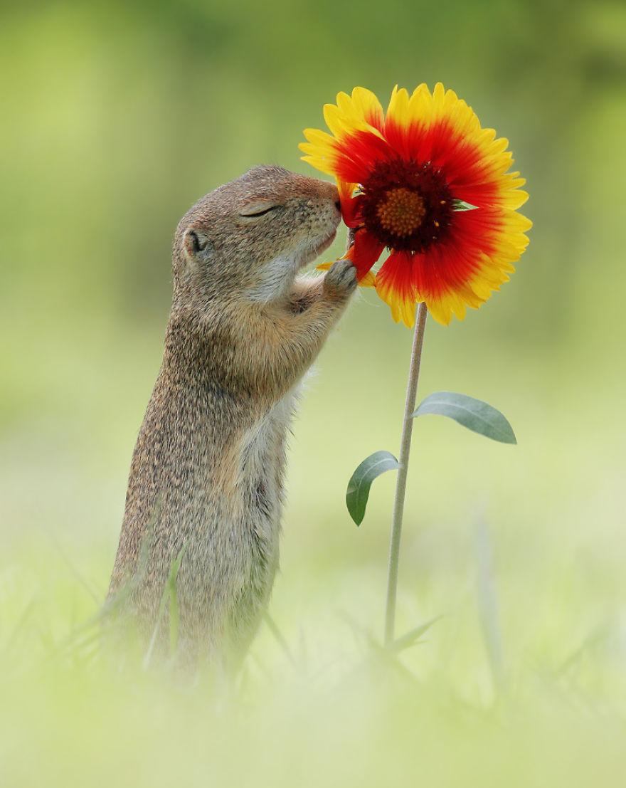 Позитив в дикой природе на снимках