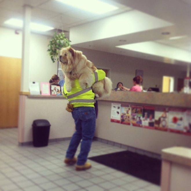 Собаки и трудный поход к ветеринару