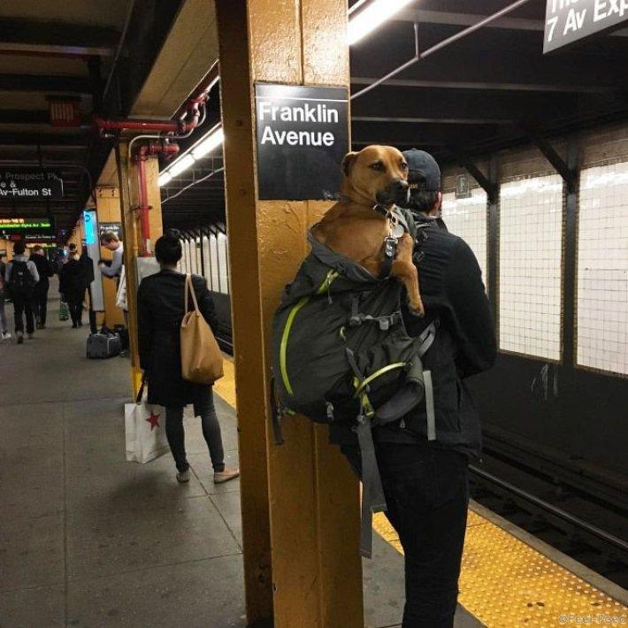 Жители Нью-Йорка и запрет на проезд с собаками в метро