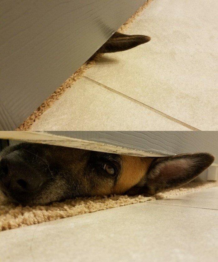 Очаровательные и дурашливые собаки на снимках