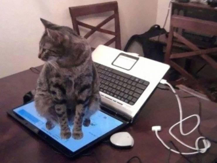 20 снимков, доказывающих, что кошки могут доставлять неудобства