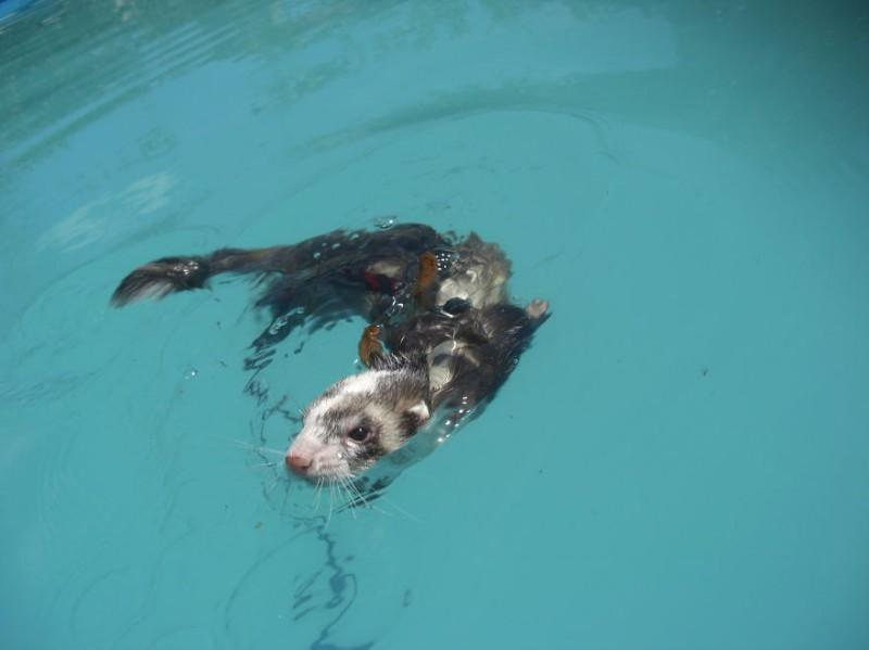 Дикие и домашние животные купаются