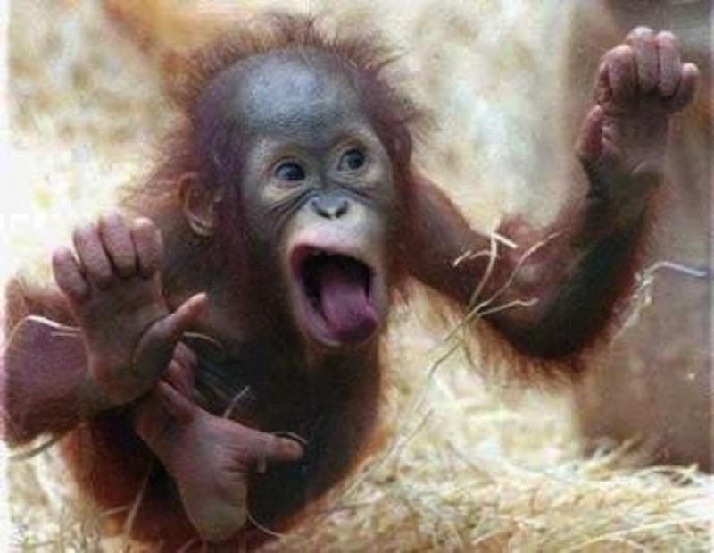 25 милых животных, которые лижут окна