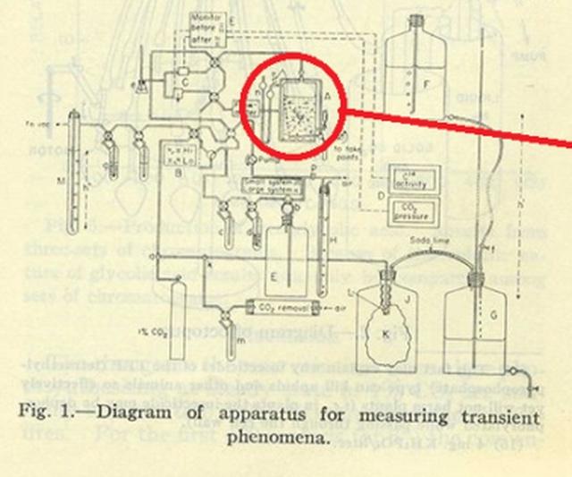 Пасхалка в научной работе