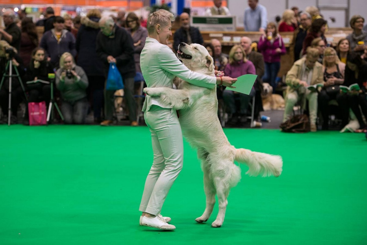 Выставка собак Crufts Dog Show 2019 проходит в Великобритании