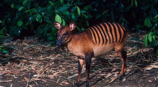 Животные, о существовании которых вы не знали