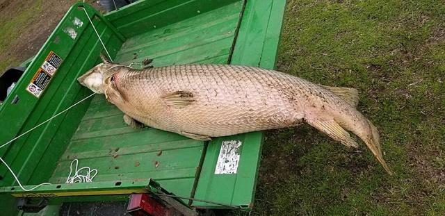 В Новом Орлеане выловили доисторическую рыбу