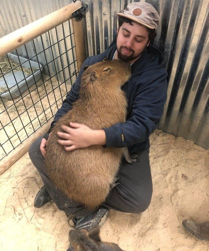Эти тёплые фотографии доказывают, что животные созданы из любви