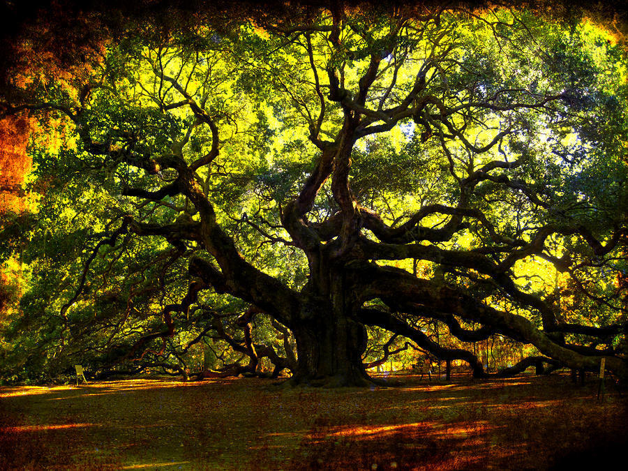 Самые странные и необычные деревья в мире